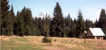 mei2001-3.jpg